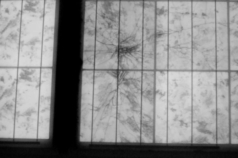EL Aufnahme mit Sternbruchzelle nach Hagelschlag