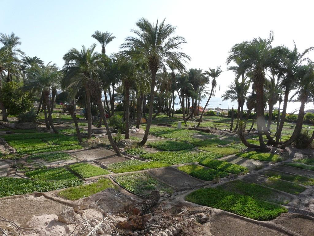 Jardins vers la mer à Aqaba