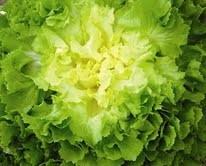 Encore des salades... Candide de Voltaire !