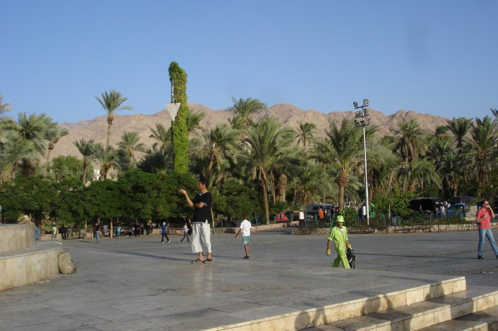 Palmiers d'Aqaba