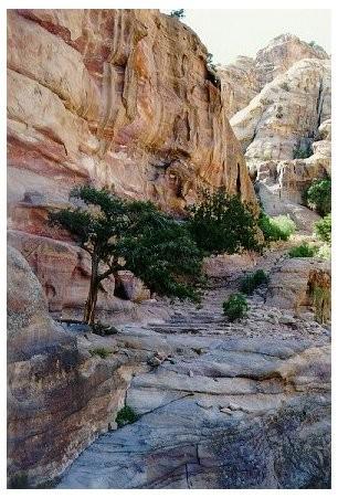 Pétra, 800 marches vers le Deir