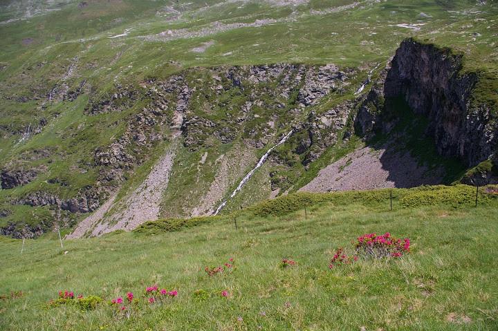 Azalées au bord du précipice Photo Claude Renaudat