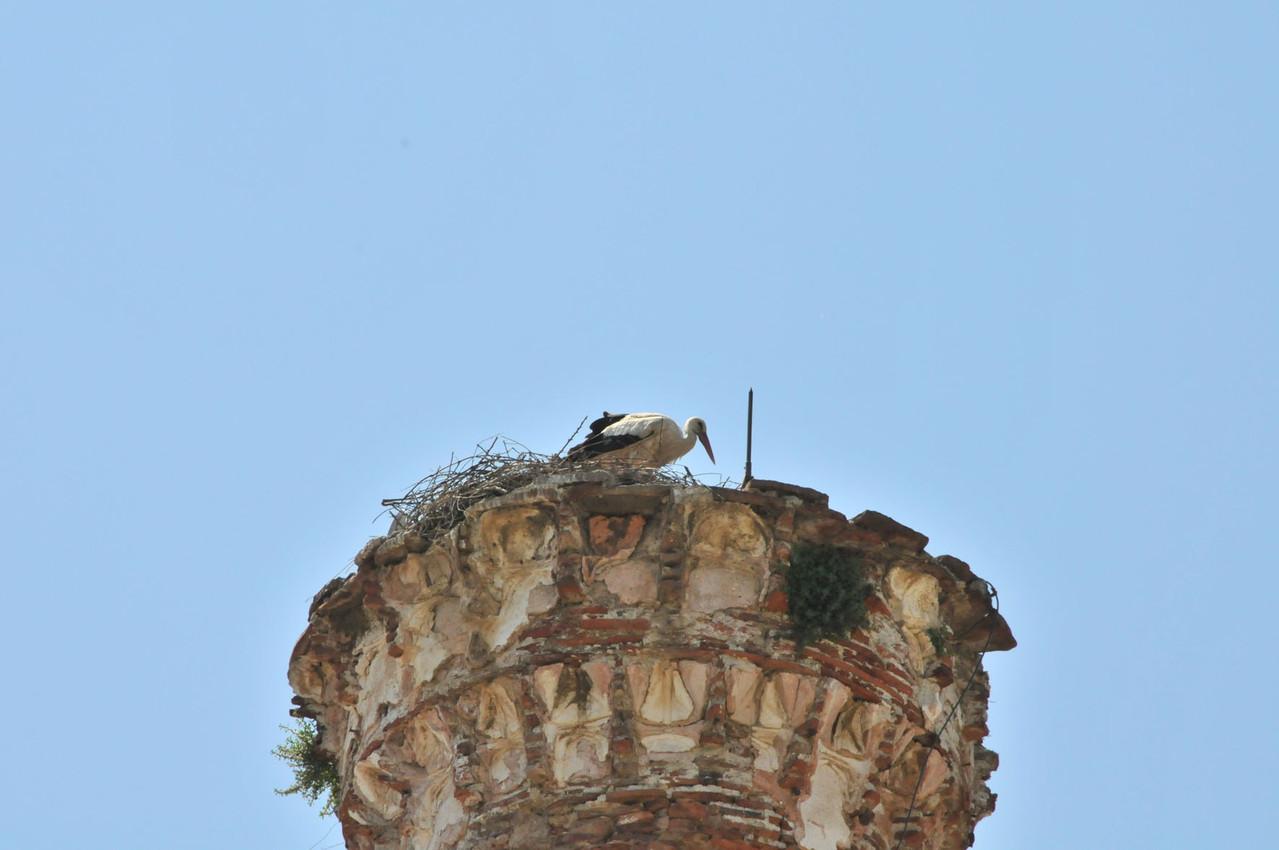 Der Storch hat sich auf dem Minarett breit gemacht