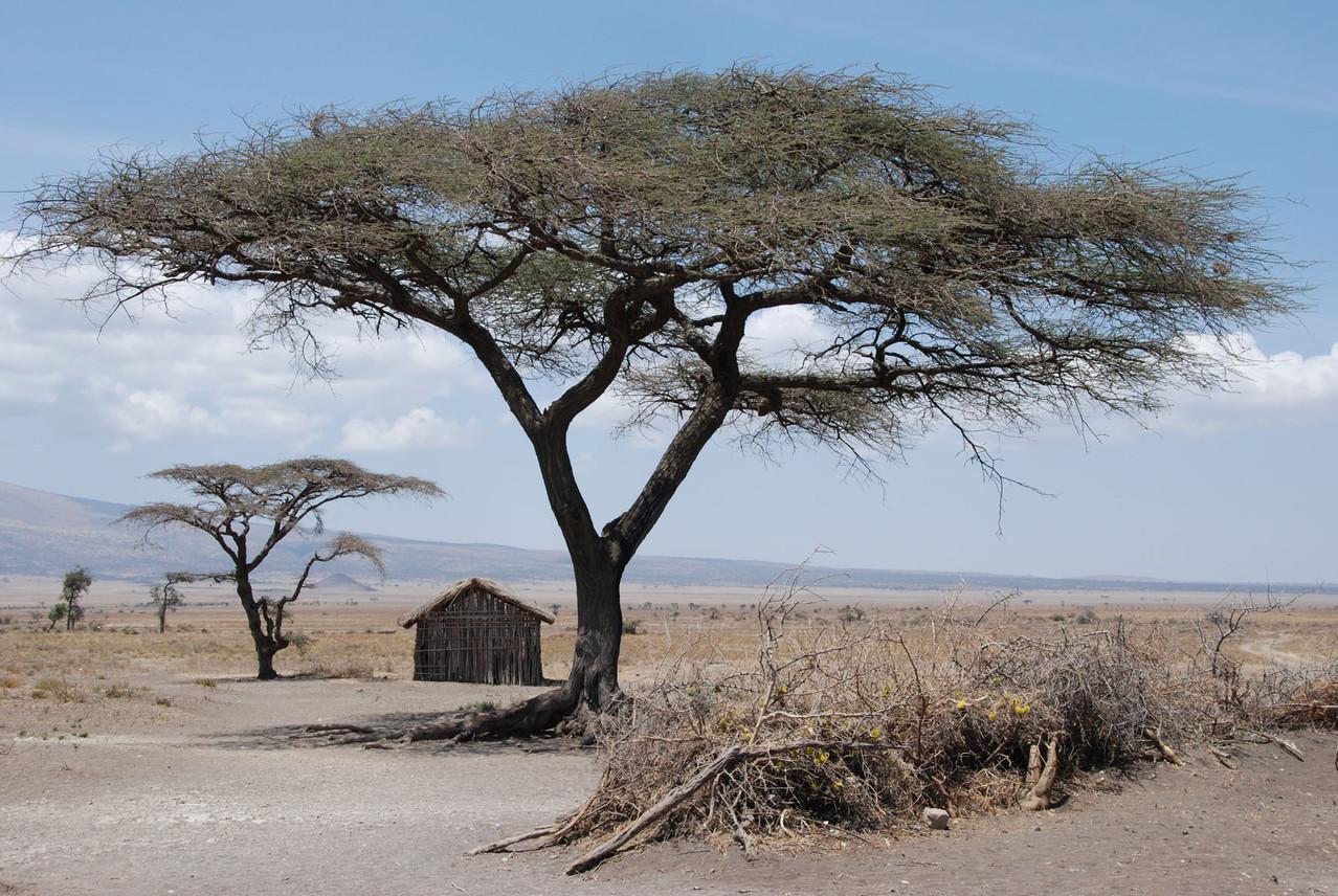 Wir besuchen die Massai - ganz hinten das Schulhaus