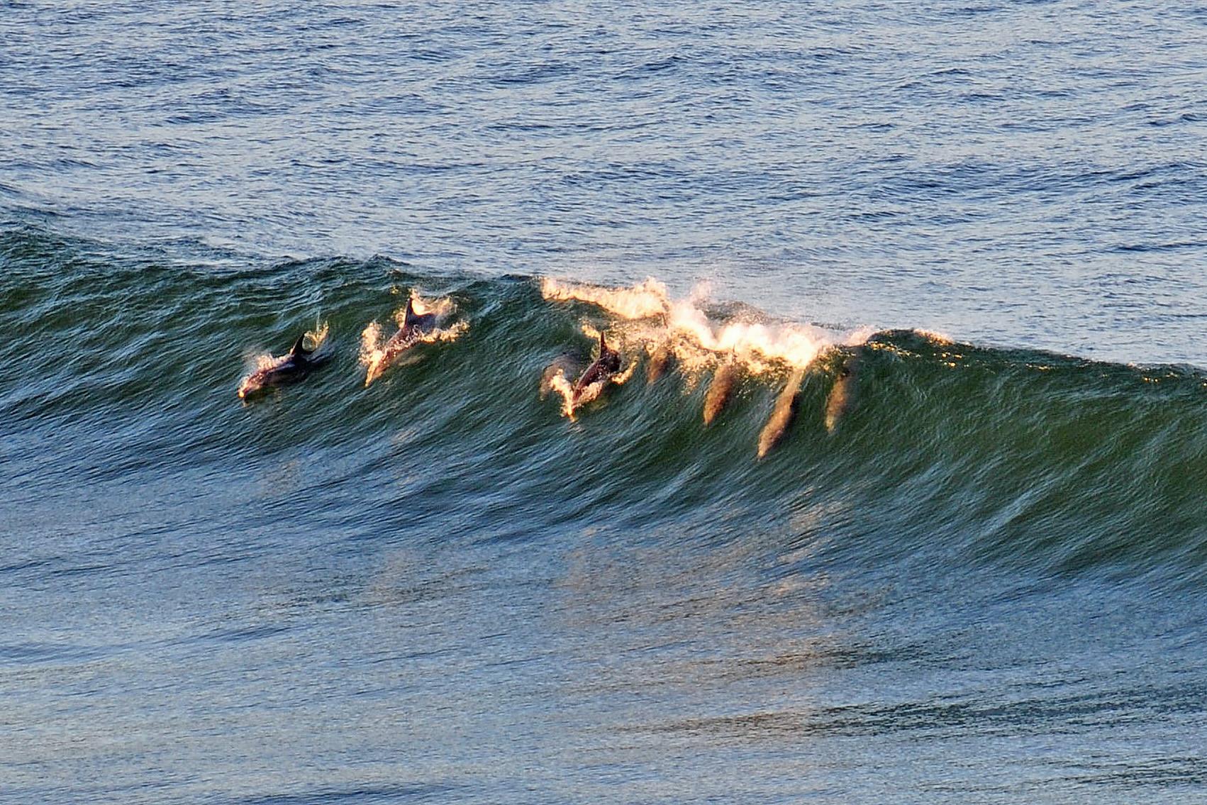 ...und Delphinen in der Abendsonne