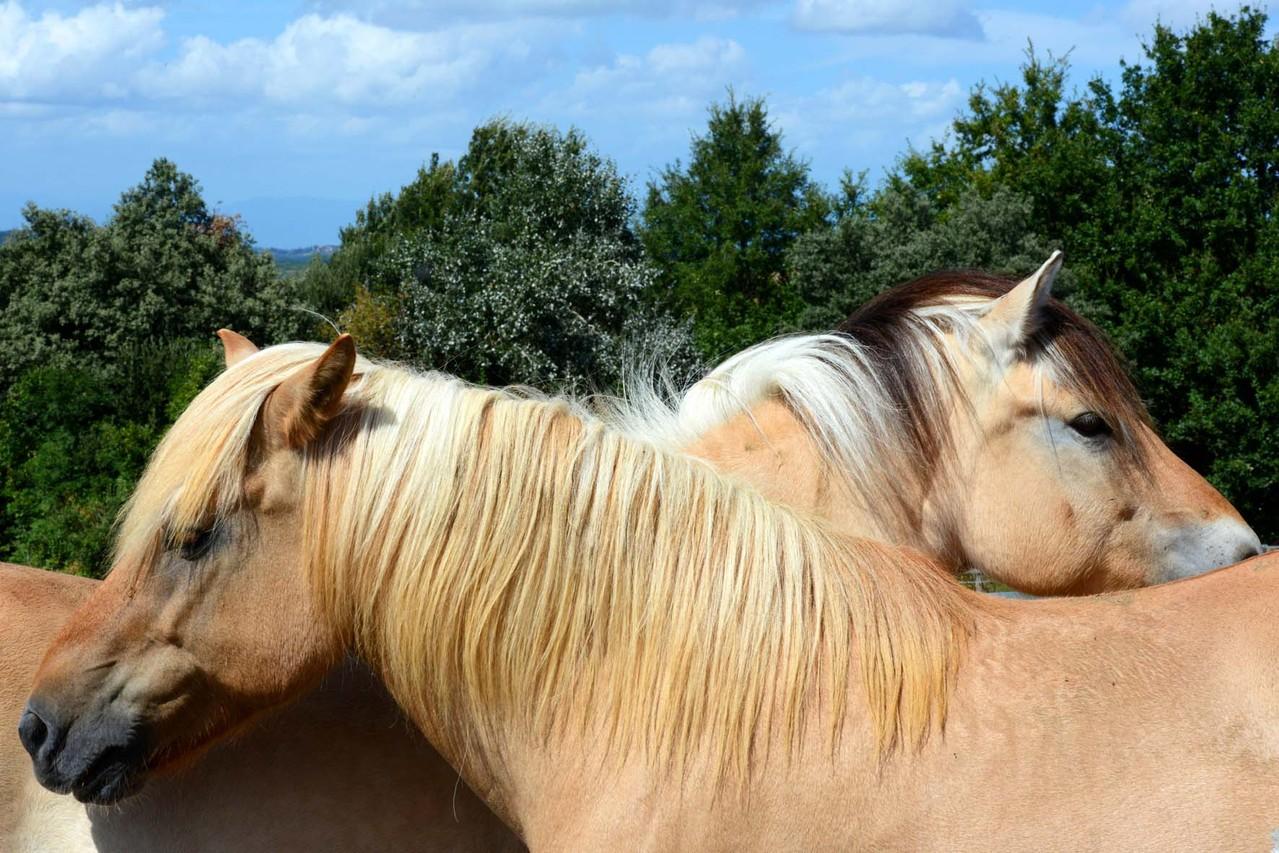 Hier findet der Pferde-Photographie-Workshop statt