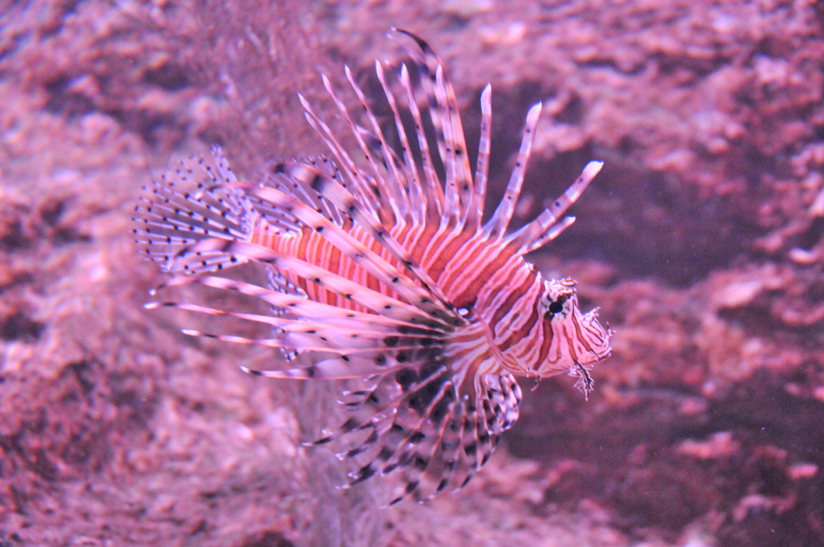 Besuch des Oceanworld in Dingle