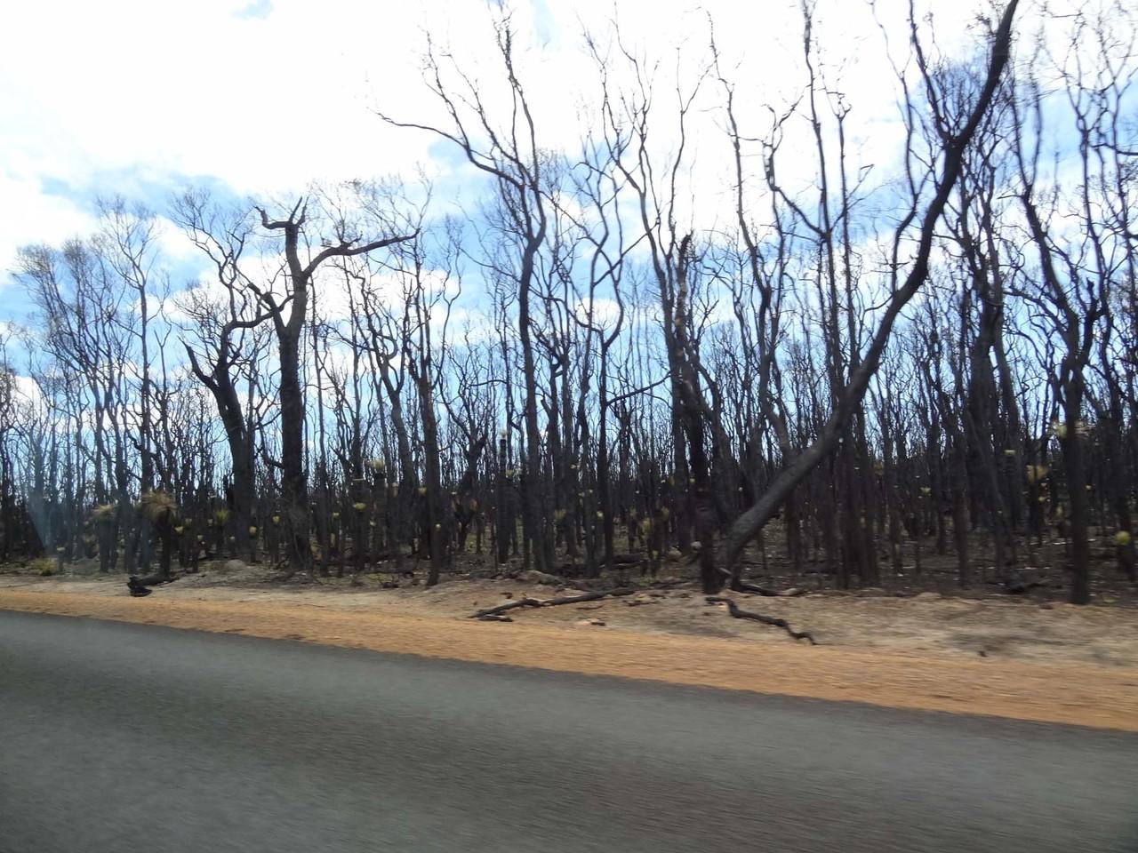 Knapp nach dem Waldbrand mit halber Tankfüllung unterwegs