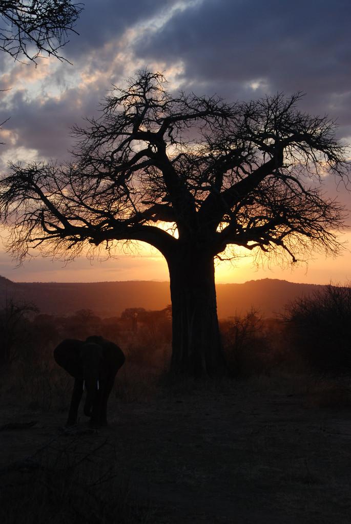 Was für ein Abschluss der Safari Woche mit diesen Bildern