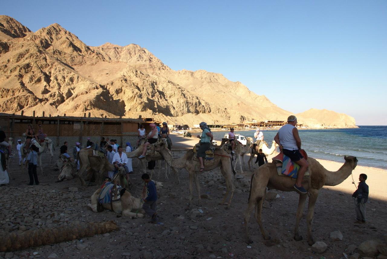 und ab auf die Kamele