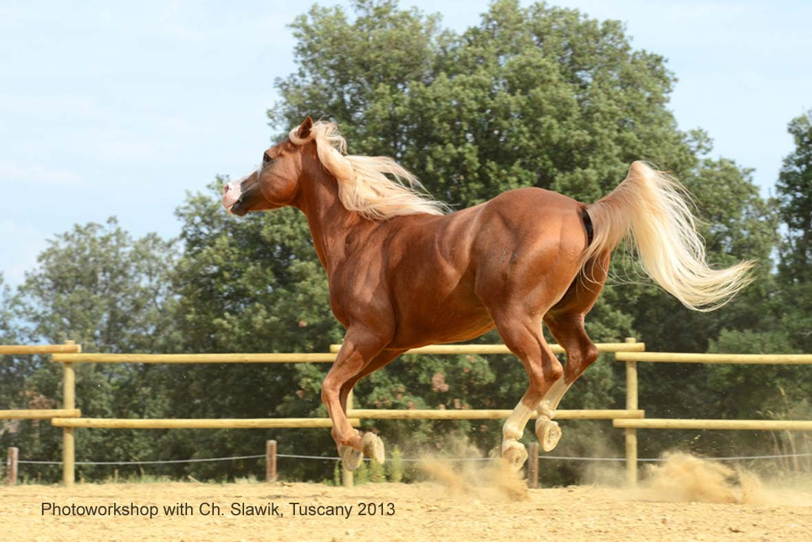 "Flying paint horse stallion ""Lucky"""