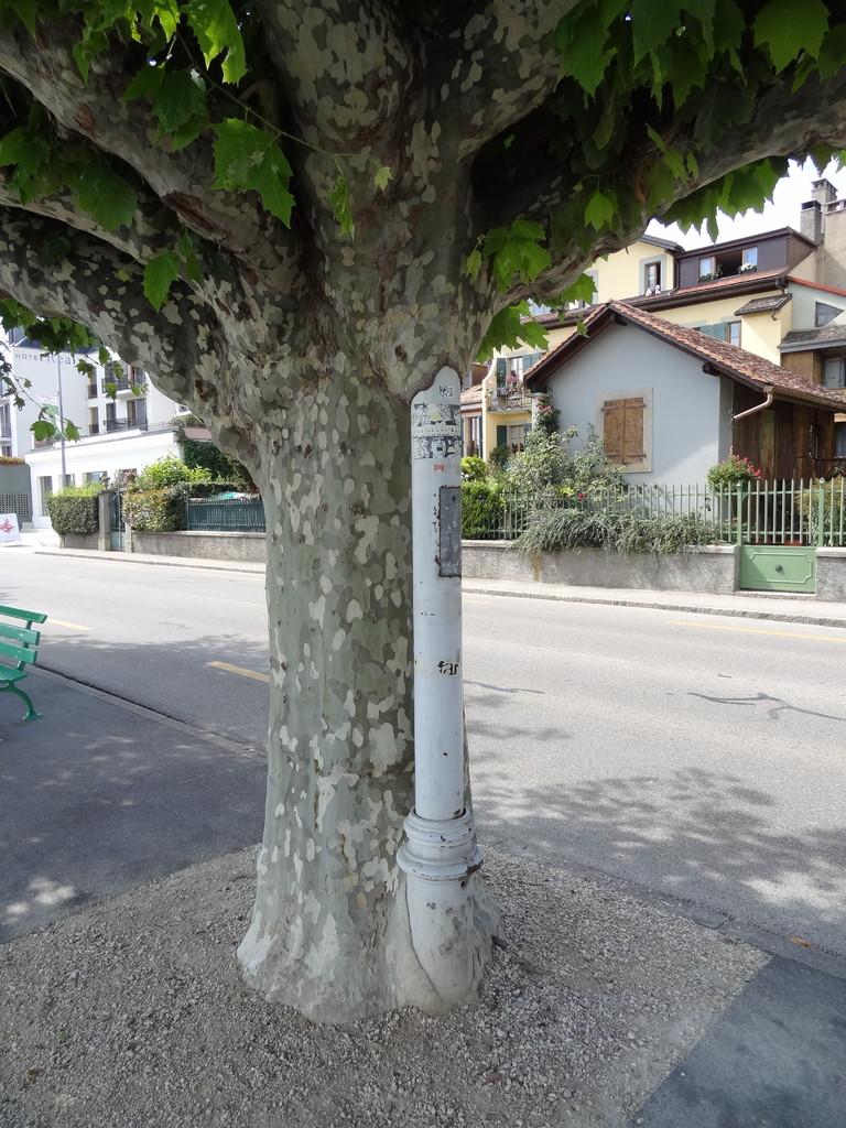 Baum frisst Laterne