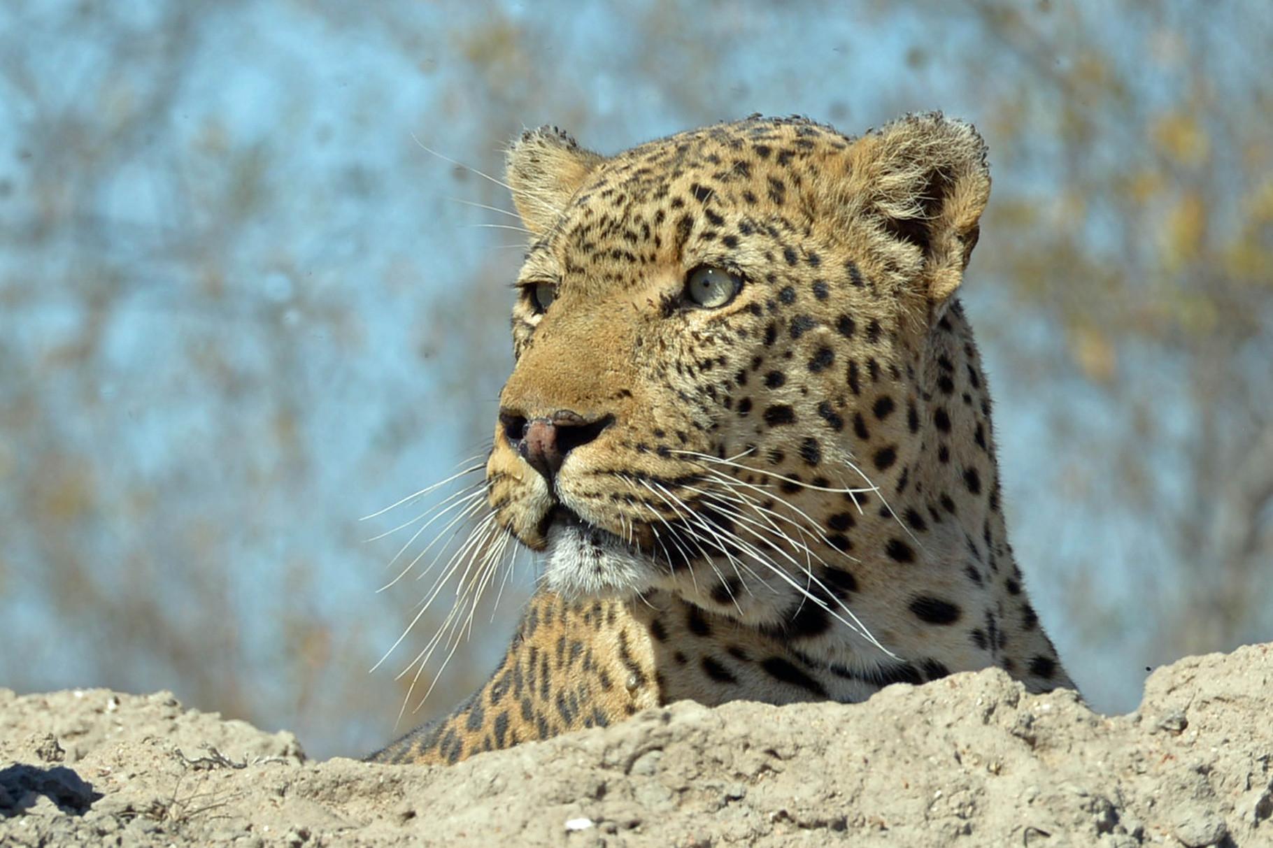 am Strassenrand bereits das Highlight der Safari Woche entdeckt :-)
