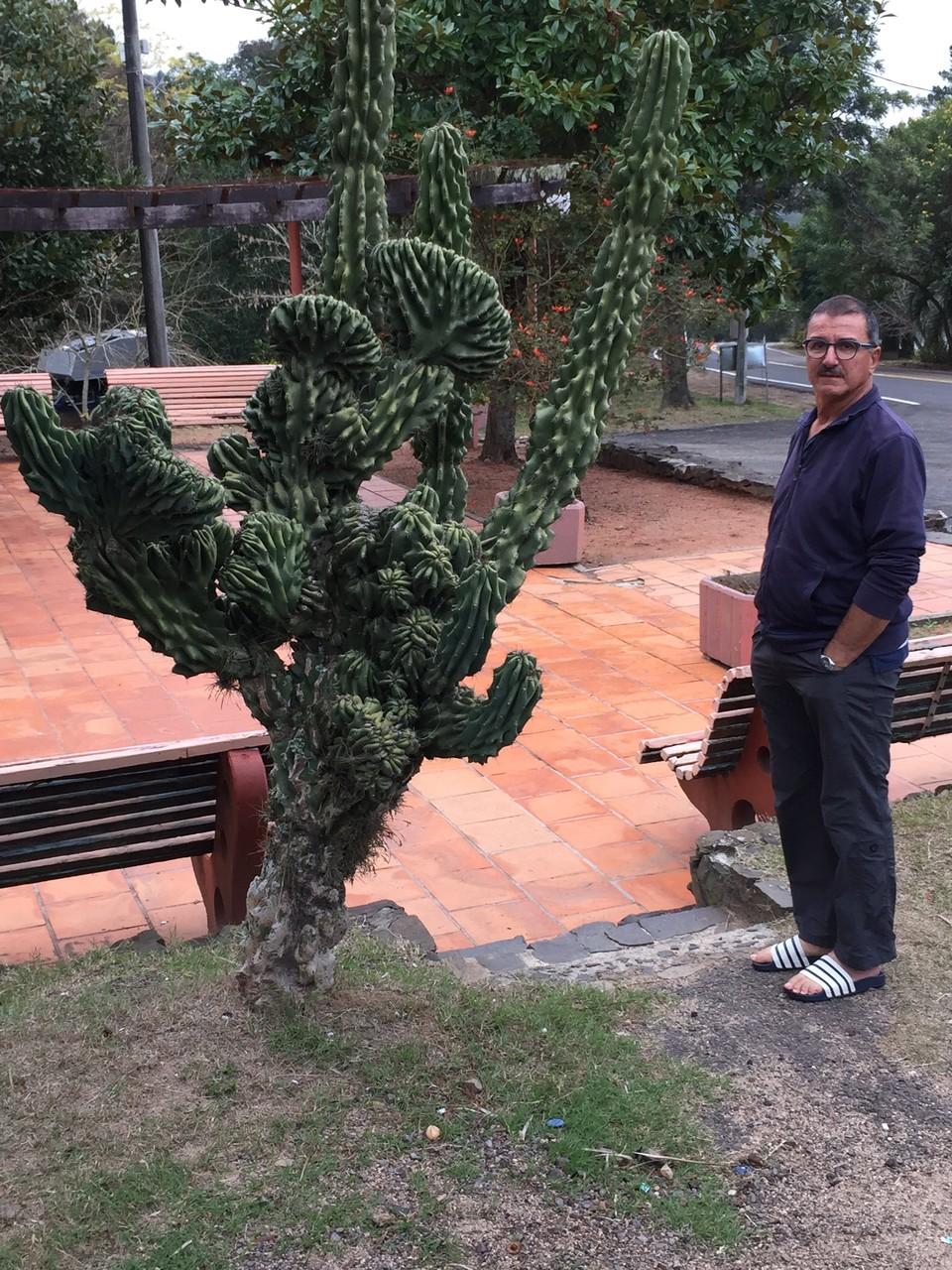 Kaktus auf dem Balnearia Municipal in Tacuarembo