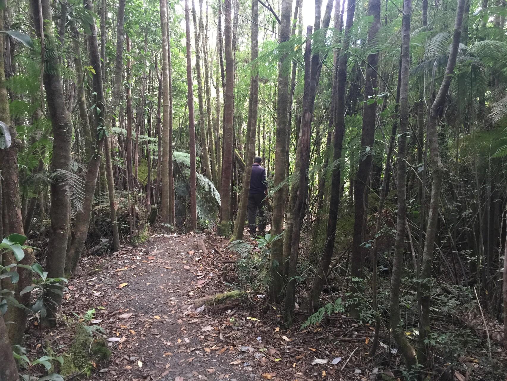 Durch den Regenwald zu den Alerten