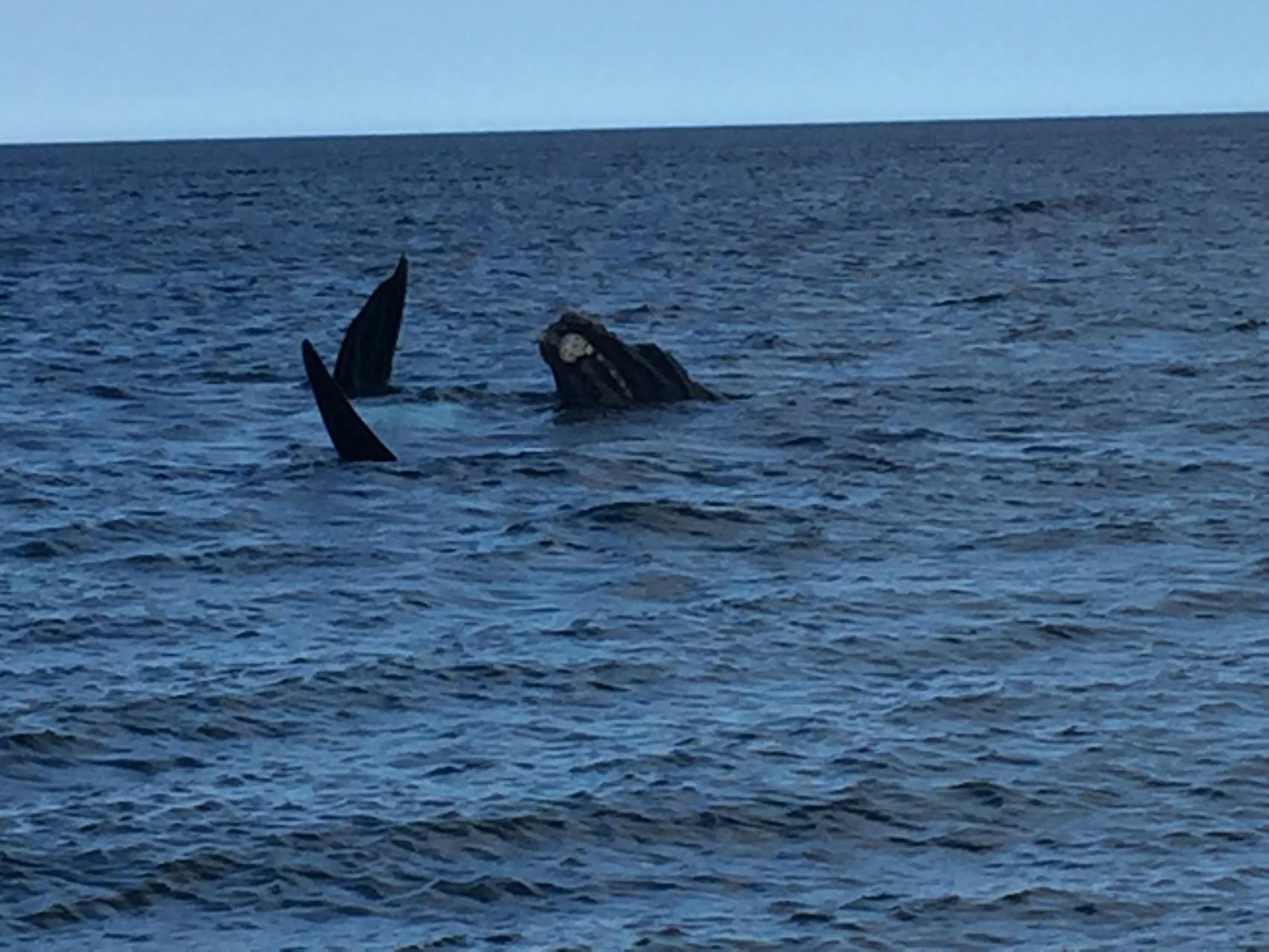 und die Wale direkt am Strand