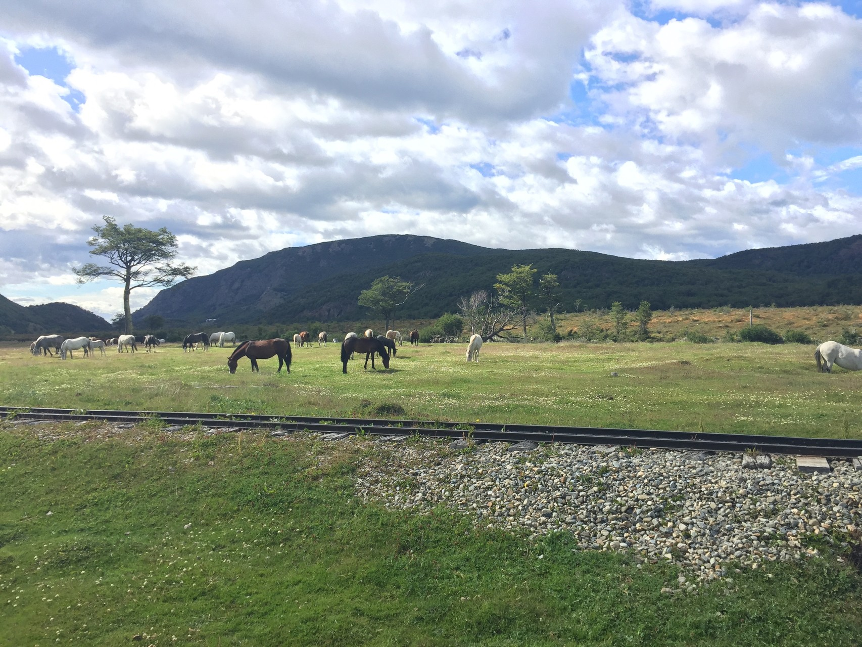 ..... Pferde.....