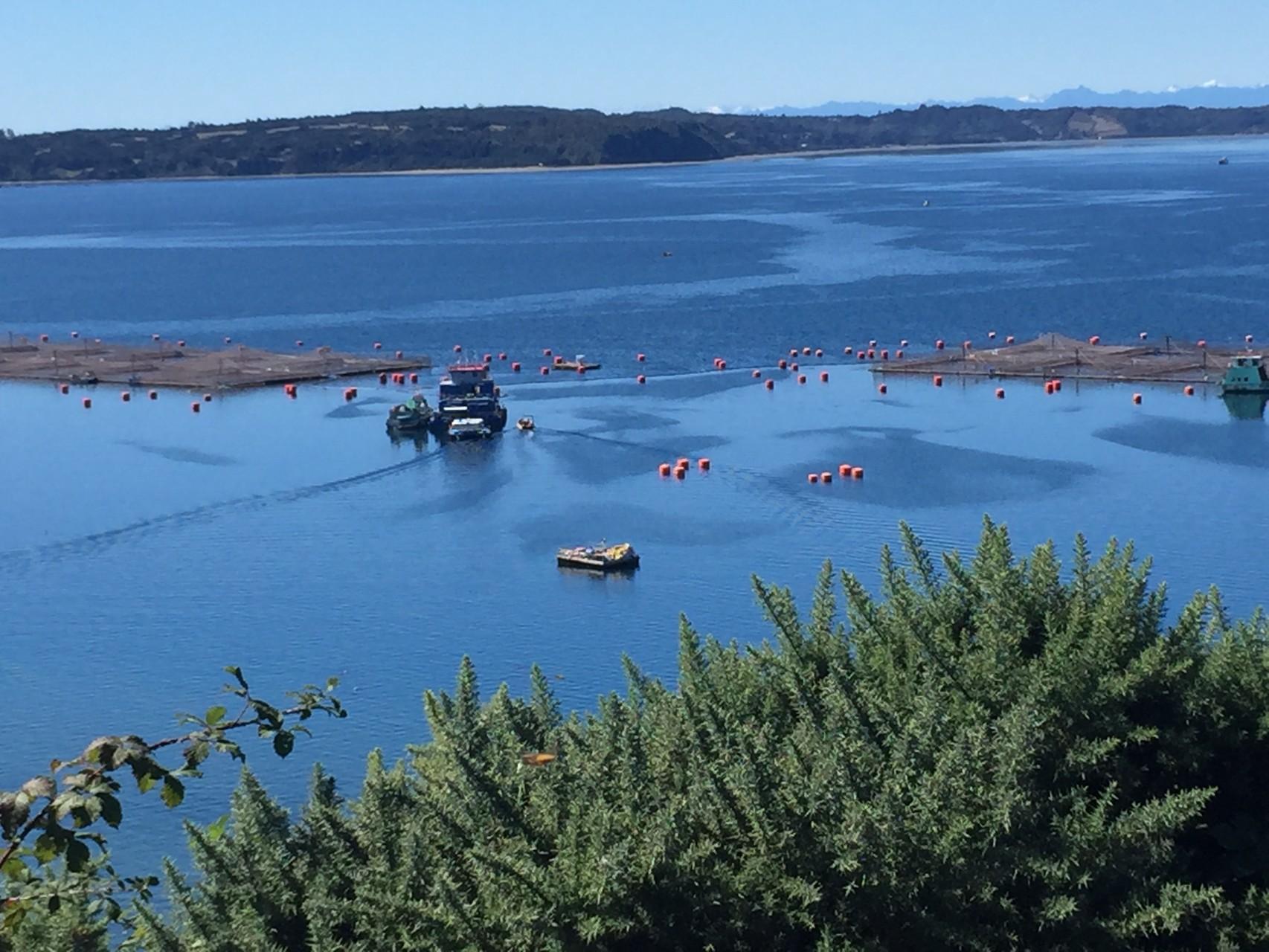 Fischfarmen auf der Insel Lemuy
