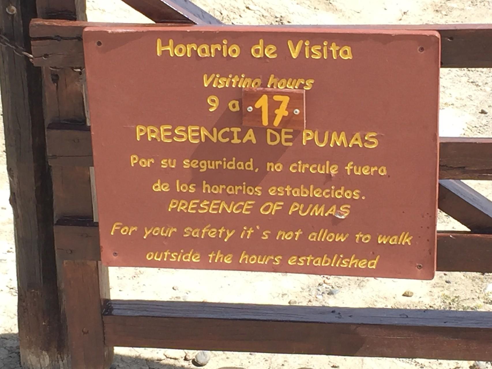 Achtung Puma auf dem Weg zu den Pinguinen!