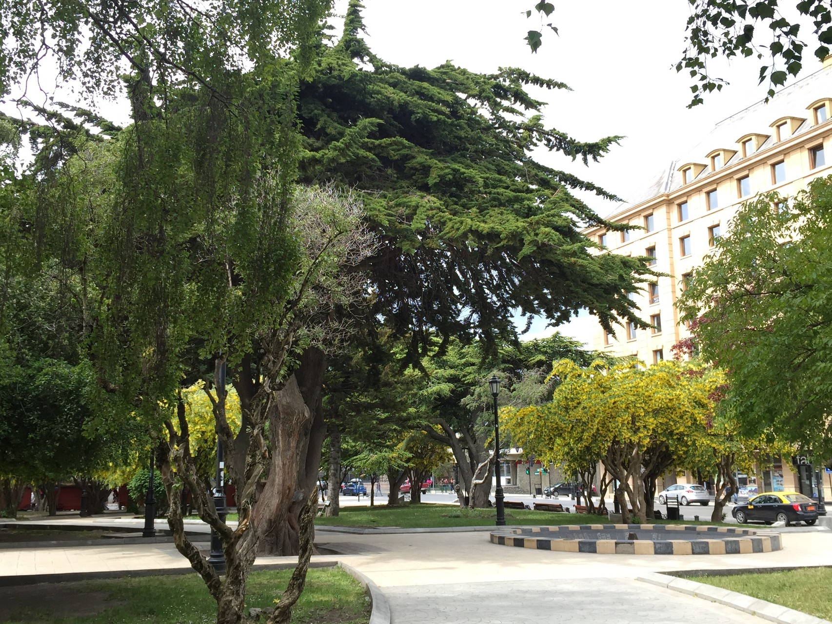 Bäume die uns faszinieren