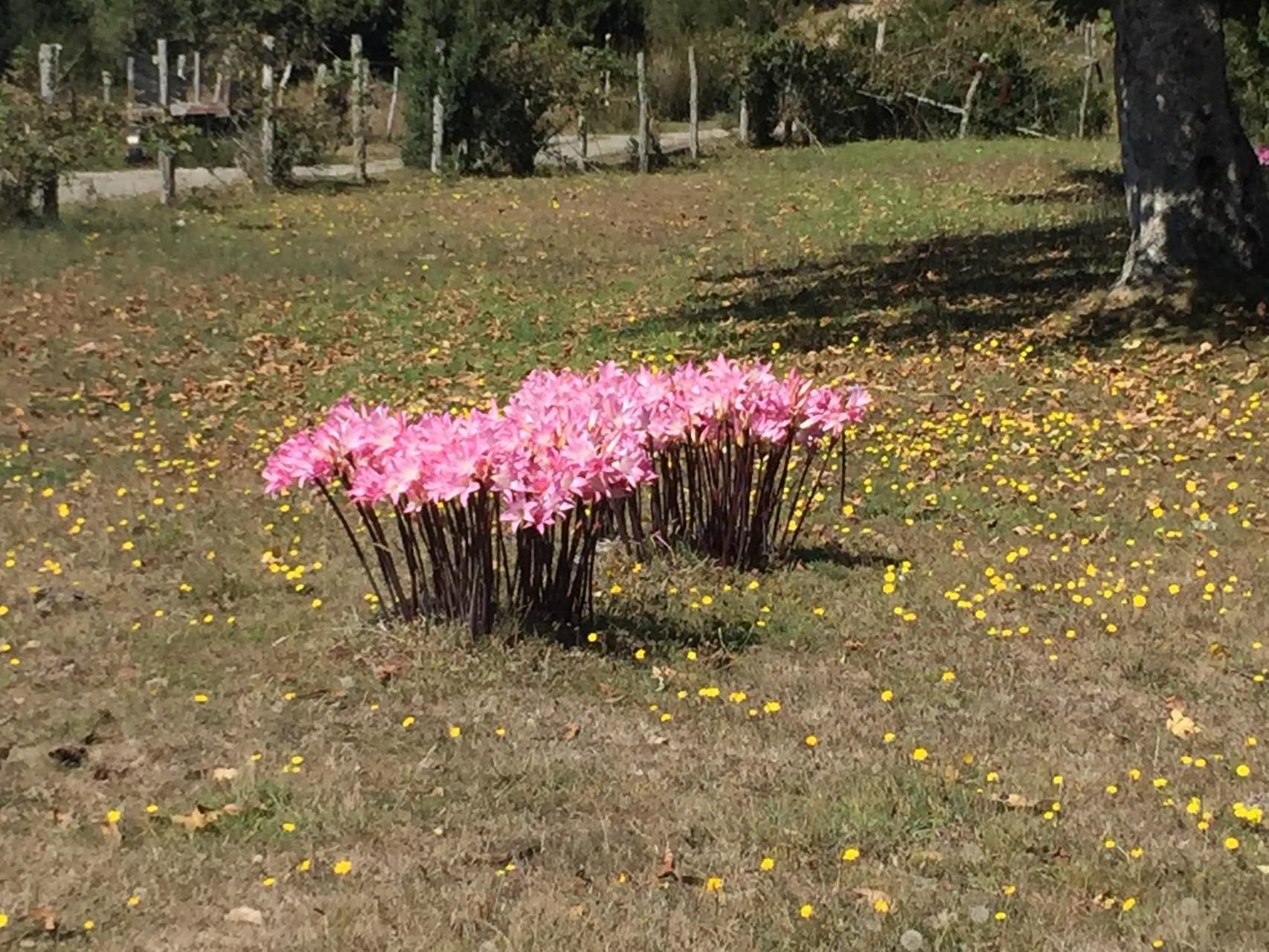 Blumen in ganz Chiloé gesehen