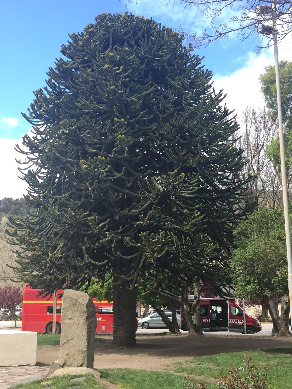 und einer der schönen Bäume