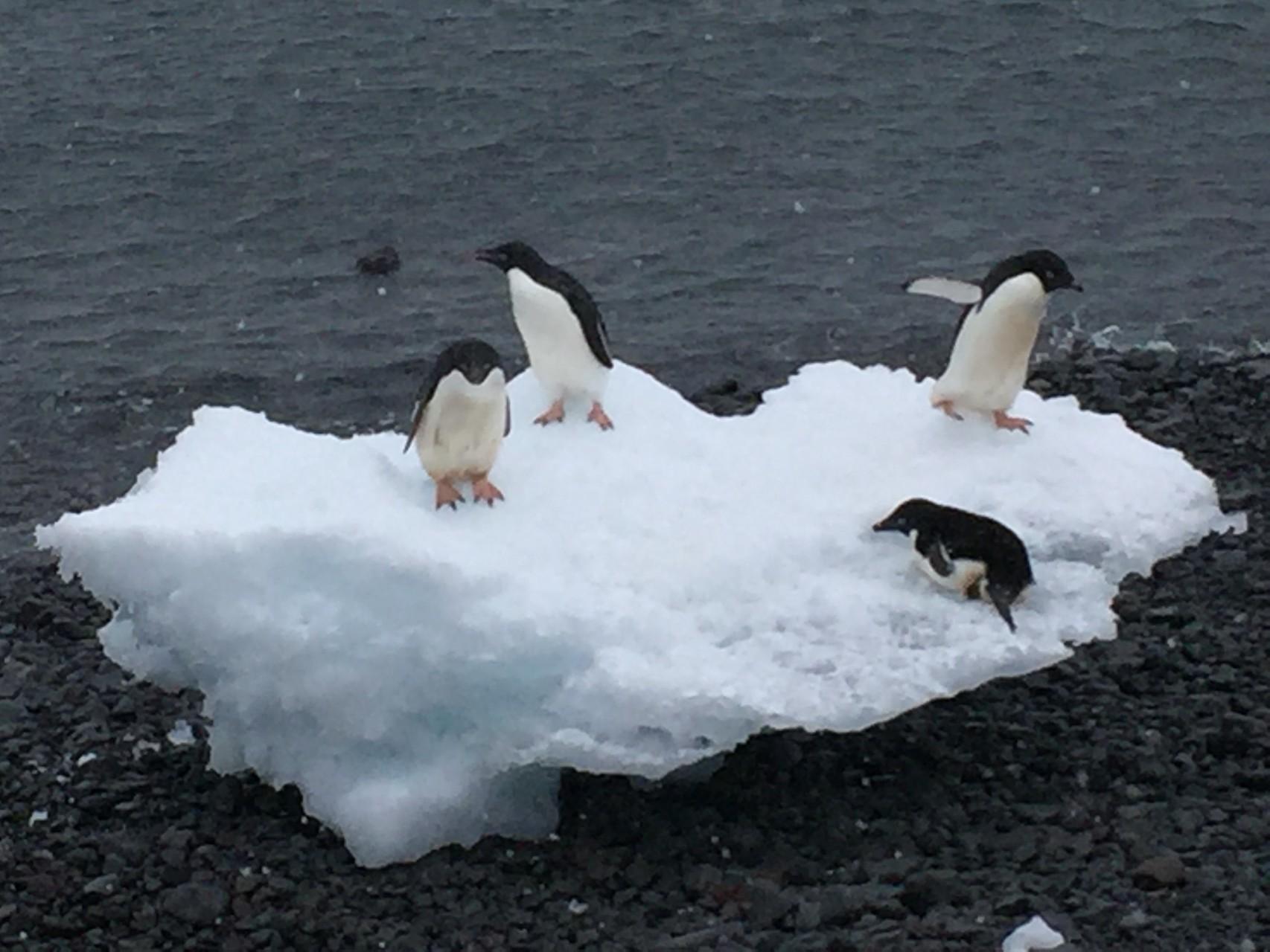 Abkühlung auf Eisscholle