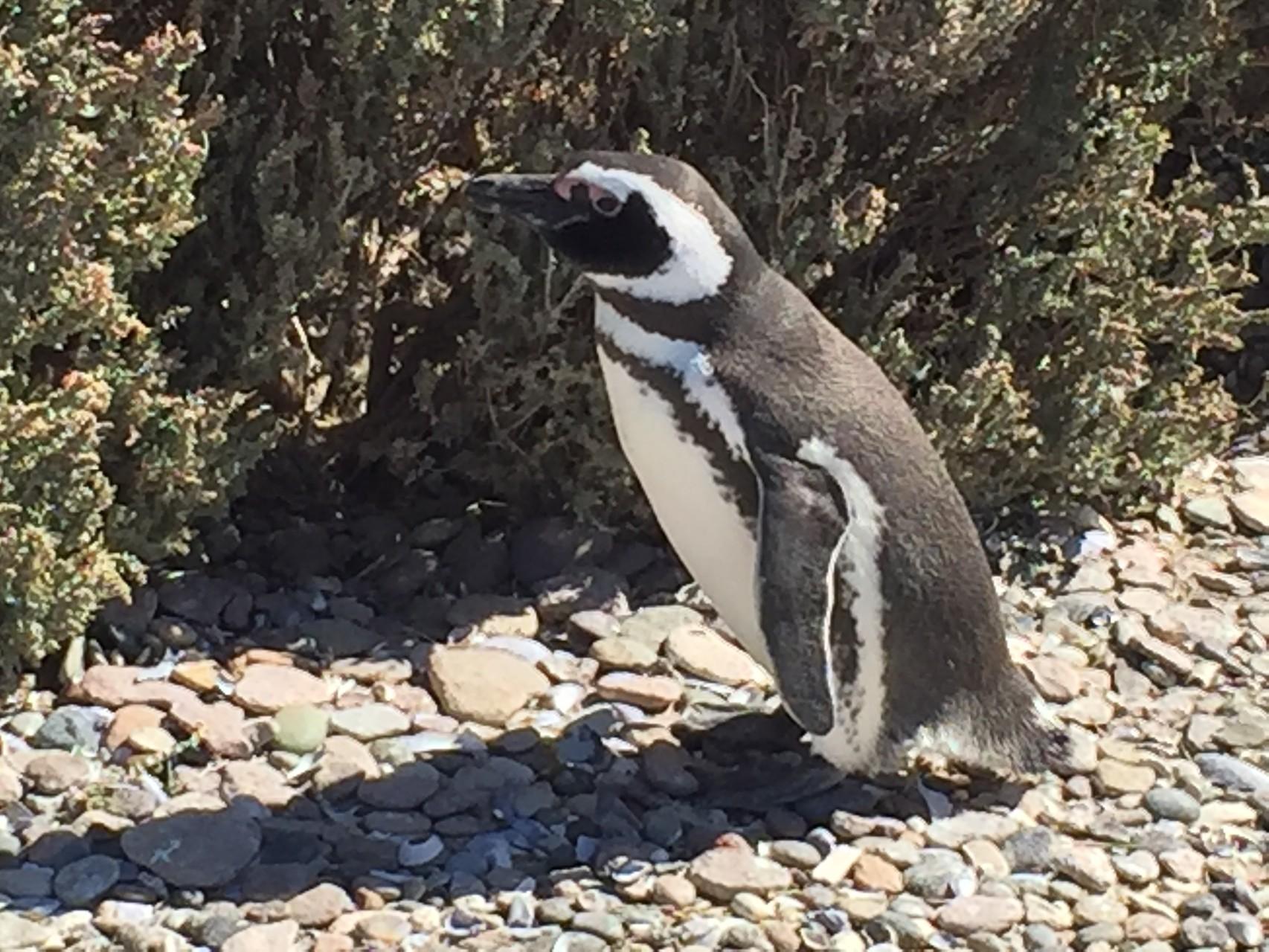 ....und Pinguinen...