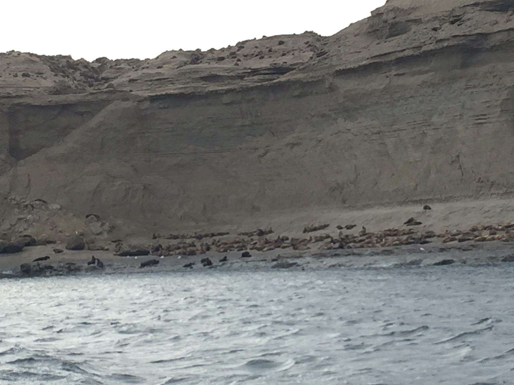 .....und an Seelöwen vorbei