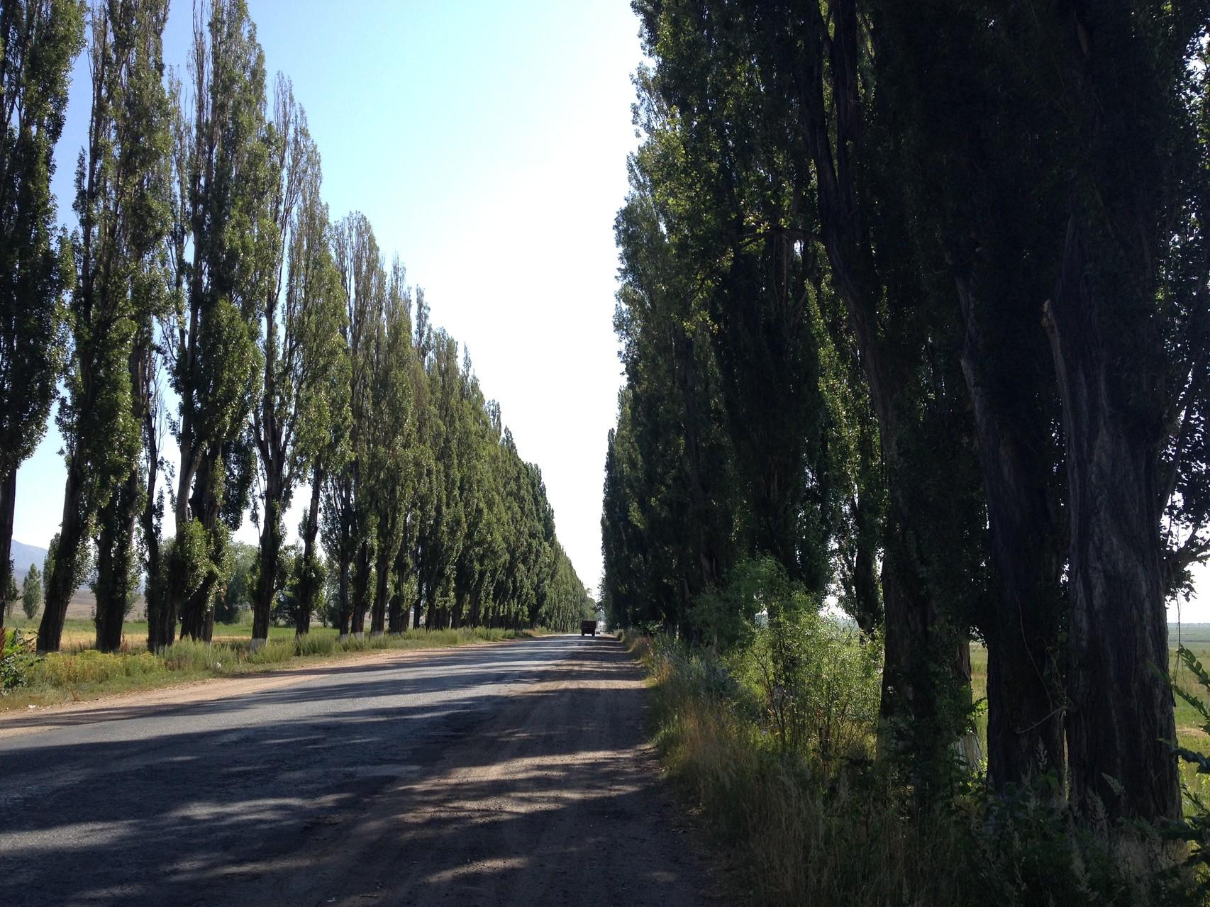 Strassenallee entlang des Sees
