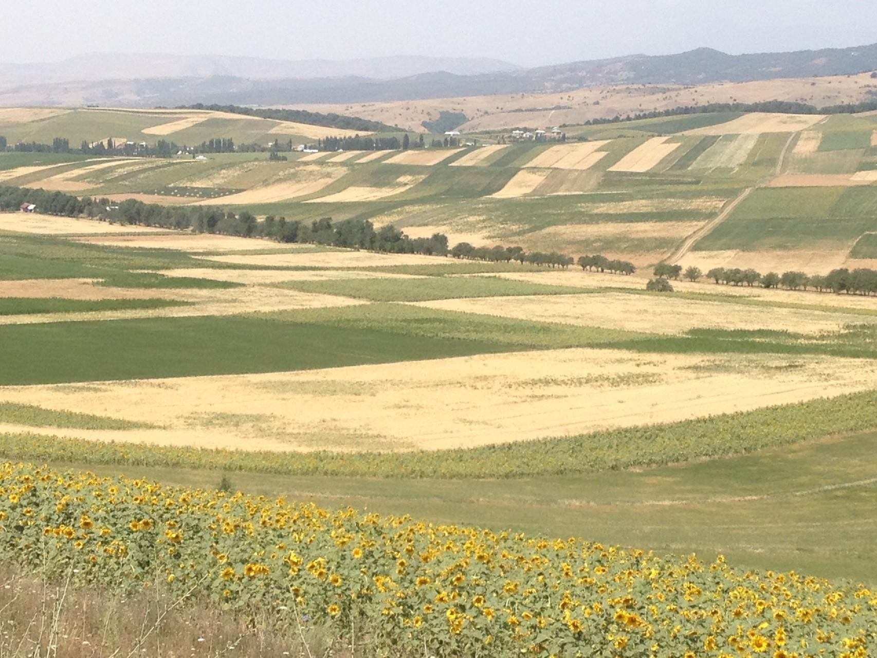 Vor Jalal Abad Getreidefelder