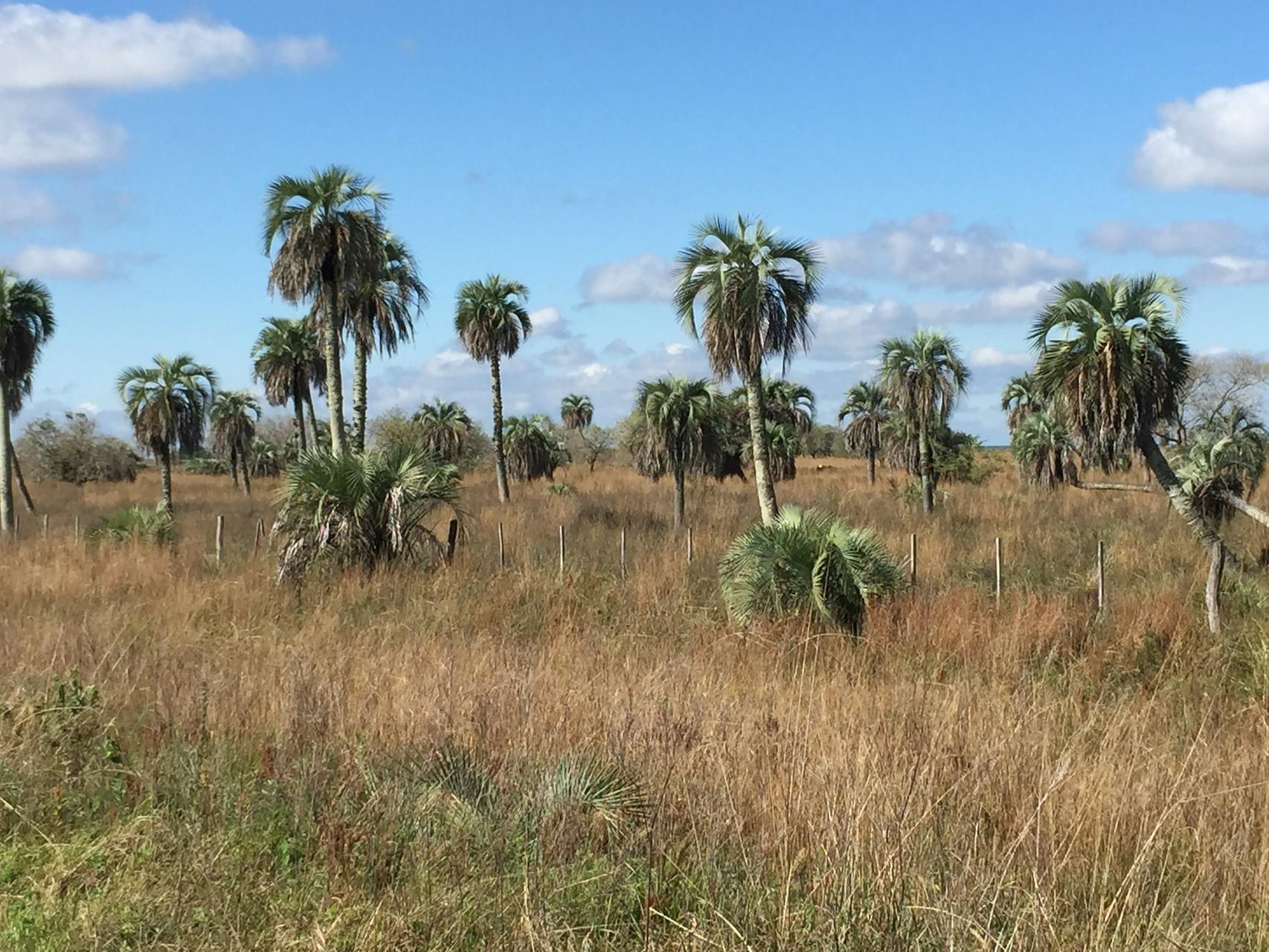 Palmen stehen im Wasser
