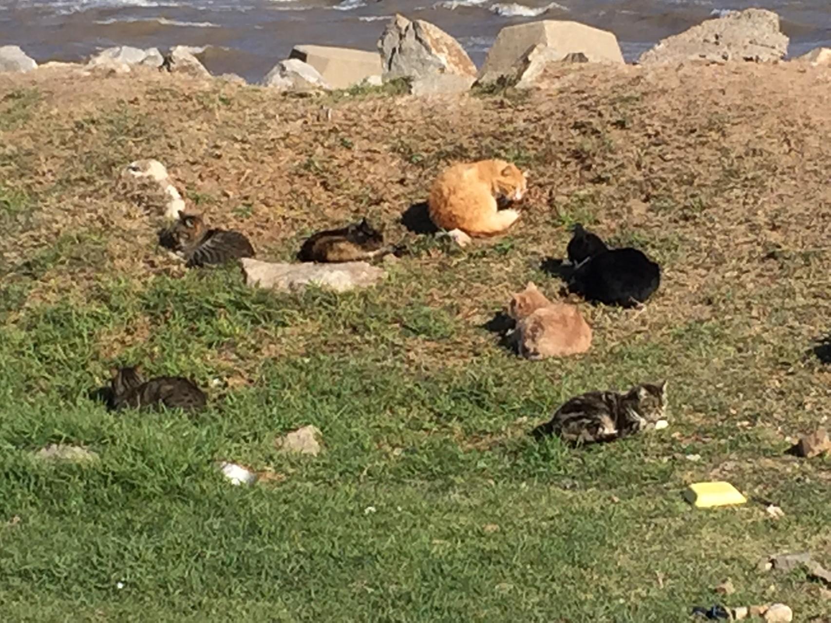 ....mit vielen wilden Katzen!