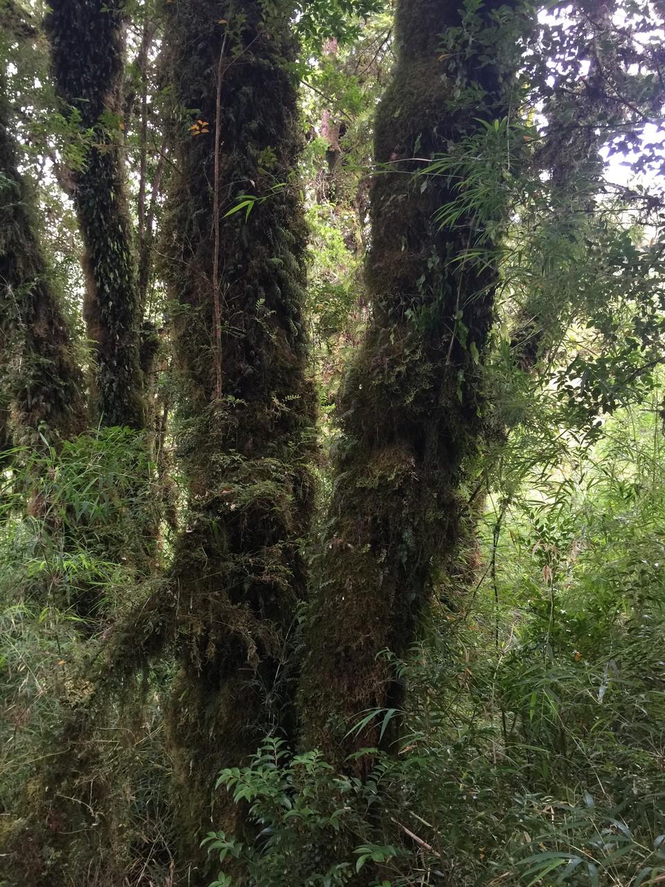 Regenwald Pumalin