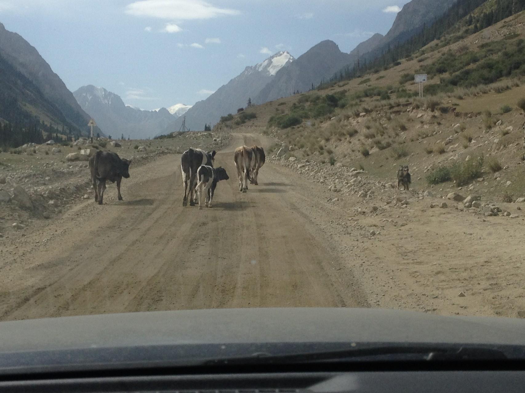 Fahrt ins Barkson-Tal auf 3800m