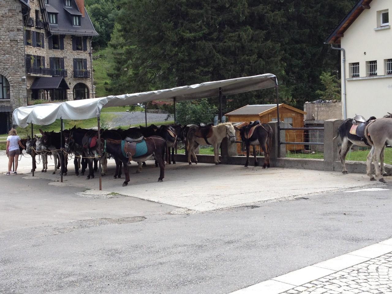die Pferde in Gavernier