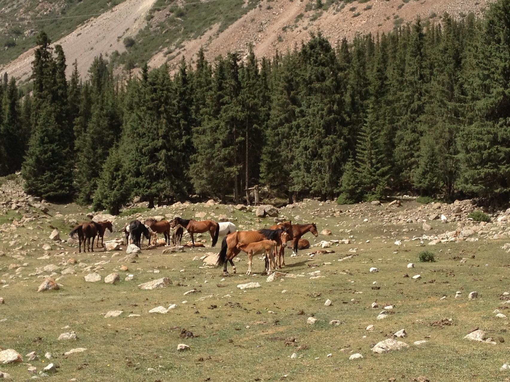 ..vorbei an Pferdeherden