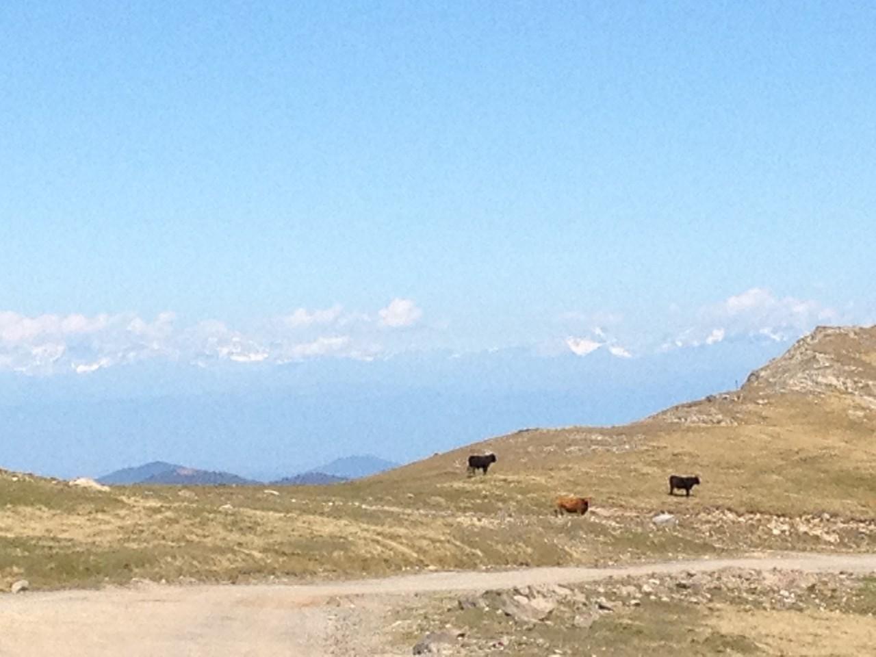 zum ersten Mal Sicht auf den grossen Kaukasus