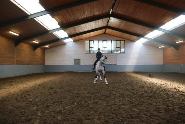 10 Jahr alt Prix St Georges Pferd, nach England verkauft