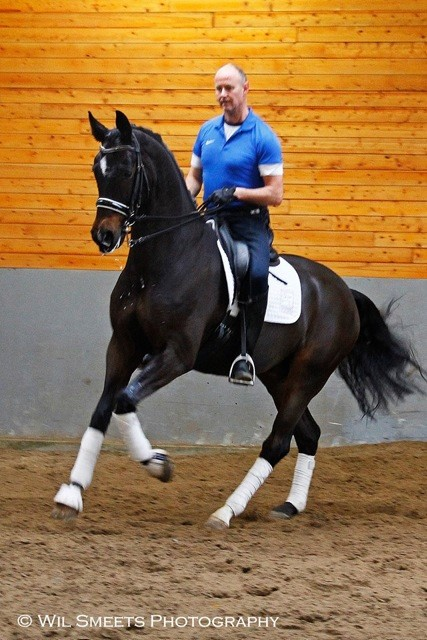 7 Year old gelding on Prix St Georges level
