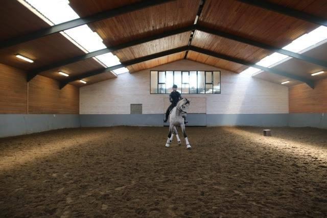 10 jarig Prix St Georges paard, verkocht naar Engeland