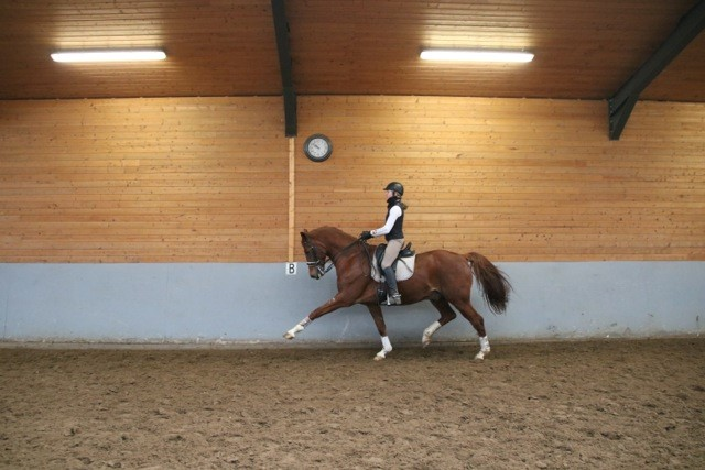 10 year old gelding on Prix St Georges level