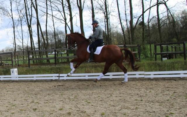 8 jarig Prix St Georges Paard, verkocht naar de Verenigde Staten