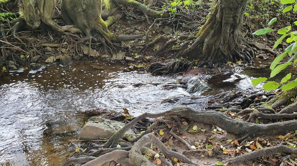 Zipfelbach mit Niedrigwasser
