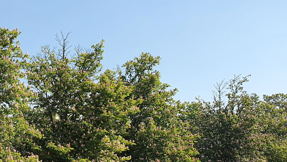Auch die vermeintlich gesunden Bäume sind geschädigt.