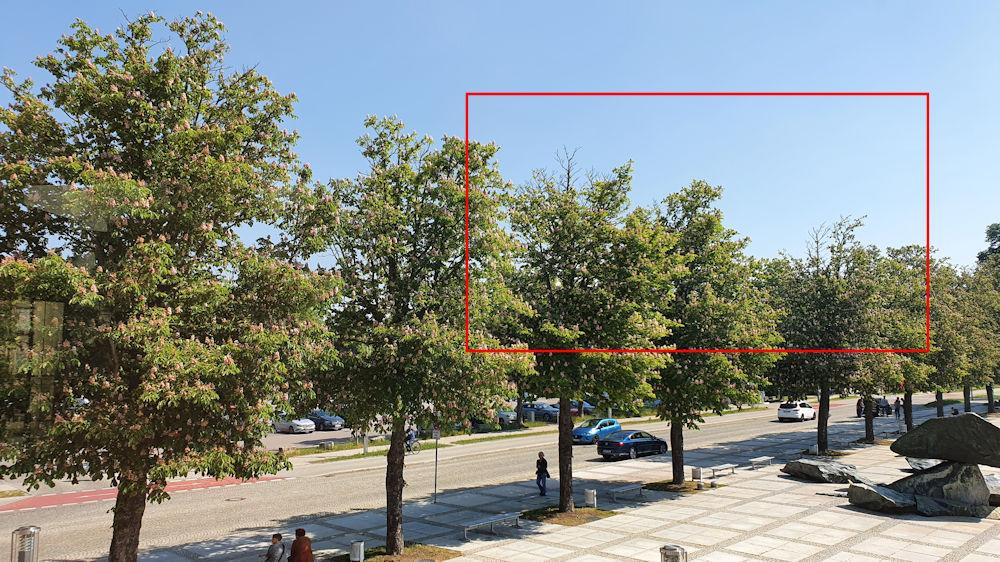 Jeder zweite Kastanienbaum vor dem Forum hat deutliche Trockenschäden.