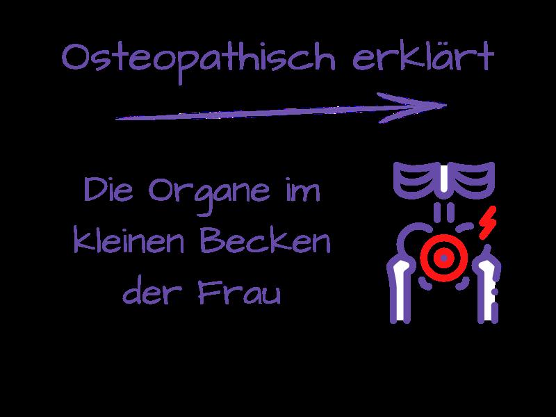 Die Organe im kleinen Becken der Frau - osteopathisch erklärt