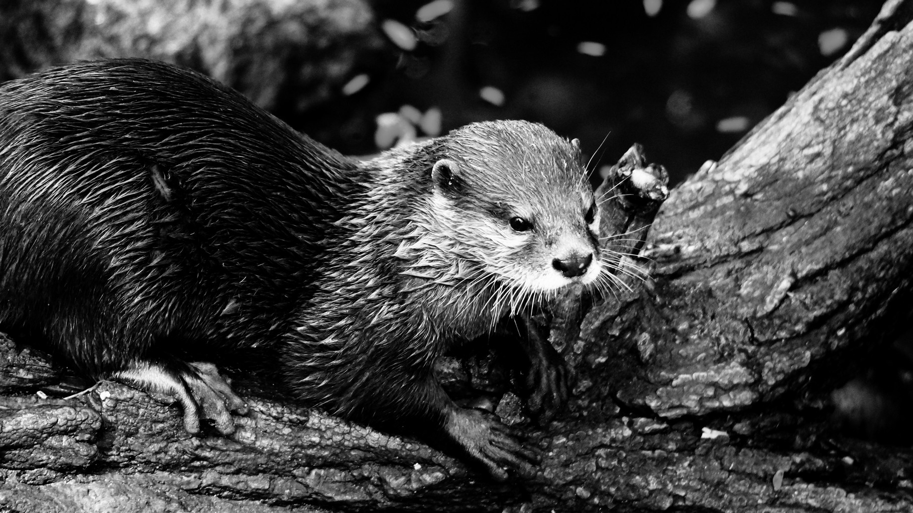 Karlsruher Zoo 2014