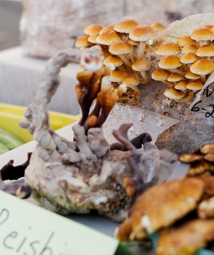 "frische Vitalpilze: <span>Photo by <a href=""https://unsplash.com/@acreativegangster?utm_source=unsplash&amp;utm_medium=referral&amp;utm_content=creditCopyText"">Allie</a> on <a href=""https://unsplash.com/s/photos/medicinal-mushrooms?utm_source=unsplash&amp"