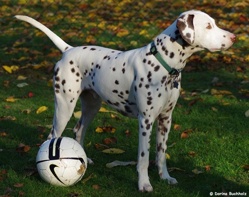 Somora´s Juniper Dream...wo bleibt Eivy zum Ball spielen? ...November 2015